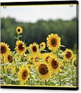 Sunny Days 8466 Acrylic Print