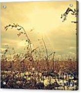 Sunny Field Acrylic Print