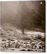 Sunny Frosty Douglassville Acrylic Print