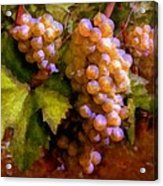 Sunny Grapes - Edition 1 Acrylic Print