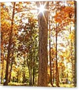 Sunny Hardwoods Acrylic Print