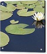 Sunny Lily Pond Acrylic Print