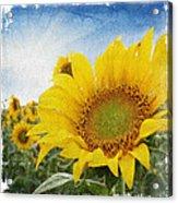 Sunny Morning Acrylic Print
