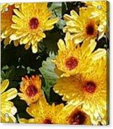 Sunny Mums Acrylic Print