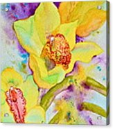 Sunny Splash Of Orchids Acrylic Print by Beverley Harper Tinsley