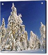 Sunny Winter Day Acrylic Print