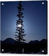 Sunny Winter Pine Acrylic Print