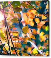Sunny Yellow Leaves Acrylic Print