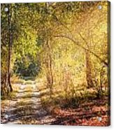 Sunray In The Autumn Forest Acrylic Print