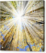 Sunrays In The Forest Acrylic Print