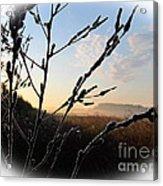 Sunrise 365 2 Acrylic Print