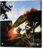 Sunrise 365 29 Acrylic Print
