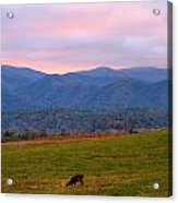 Sunrise And Deer In Cades Cove Acrylic Print