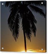 Sunrise And Palm Tree Acrylic Print