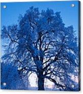 Sunrise And Tree Acrylic Print