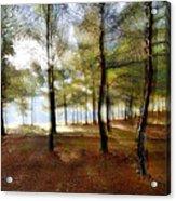 Sunrise At The Magic Forest Acrylic Print