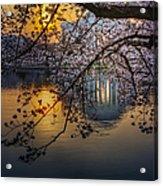 Sunrise At The Thomas Jefferson Memorial Acrylic Print