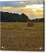 Sunrise At The Wheat Field Acrylic Print