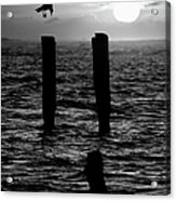 Sunrise Descent Bw - Outer Banks Ocracoke Acrylic Print
