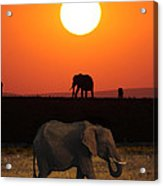 Sunrise Elephants Acrylic Print