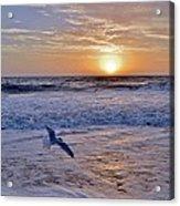 Sunrise Flight Acrylic Print