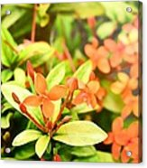 Sunrise Flower Acrylic Print