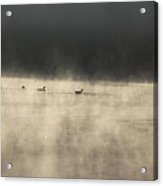 Sunrise Geese Acrylic Print