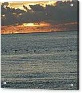 Sunrise In Florida Riviera Acrylic Print