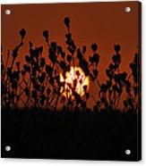 Sunrise In South Texas Acrylic Print