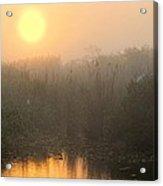 Sunrise In The Everglades Acrylic Print