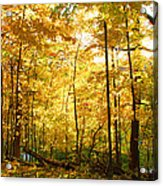 Sunrise In The Forest Acrylic Print by James Hammen