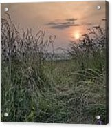 Sunrise Landscape In Summer Looking Through Wild Thistles And Gr Acrylic Print