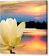 Sunrise On Lotus Lillie Acrylic Print