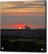 Sunrise On The Cotton Field Acrylic Print