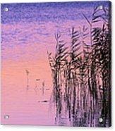 Sunrise Reeds Acrylic Print
