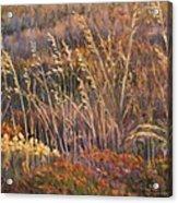 Sunrise Reflections On Dried Grass Acrylic Print