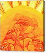 Sunrise Roses Acrylic Print
