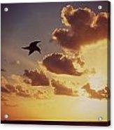 Sunrise Seagull Acrylic Print