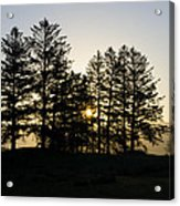 Sunrise Shines Through The Pines Acrylic Print