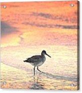 Sunrise Shorebird Acrylic Print