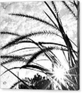 Sunrise Sunburst Acrylic Print