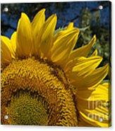Sunrise Sunflower Acrylic Print