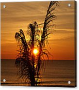 Sunrise Through The Palm Acrylic Print