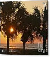 Sunrise Through The Palms Acrylic Print