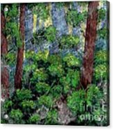 Suns Rays - Forest - Steel Engraving Acrylic Print