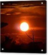 Sunset - Stuck On Tree Branch Acrylic Print