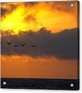 Sunset And Pelicans Acrylic Print