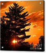 Sunset And Pine Tree  Acrylic Print