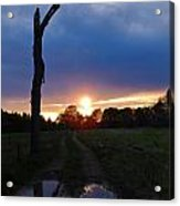 Sunset And The Dead Tree Acrylic Print