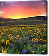 Sunset At Columbia Hills State Park Acrylic Print